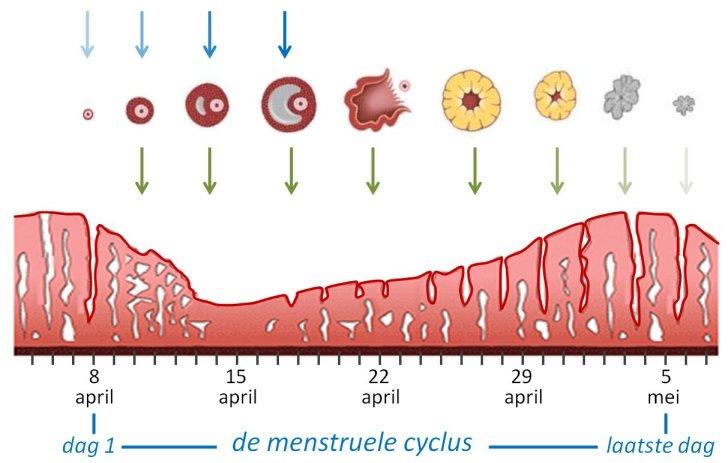Seks 1 Dag Voor Menstruatie